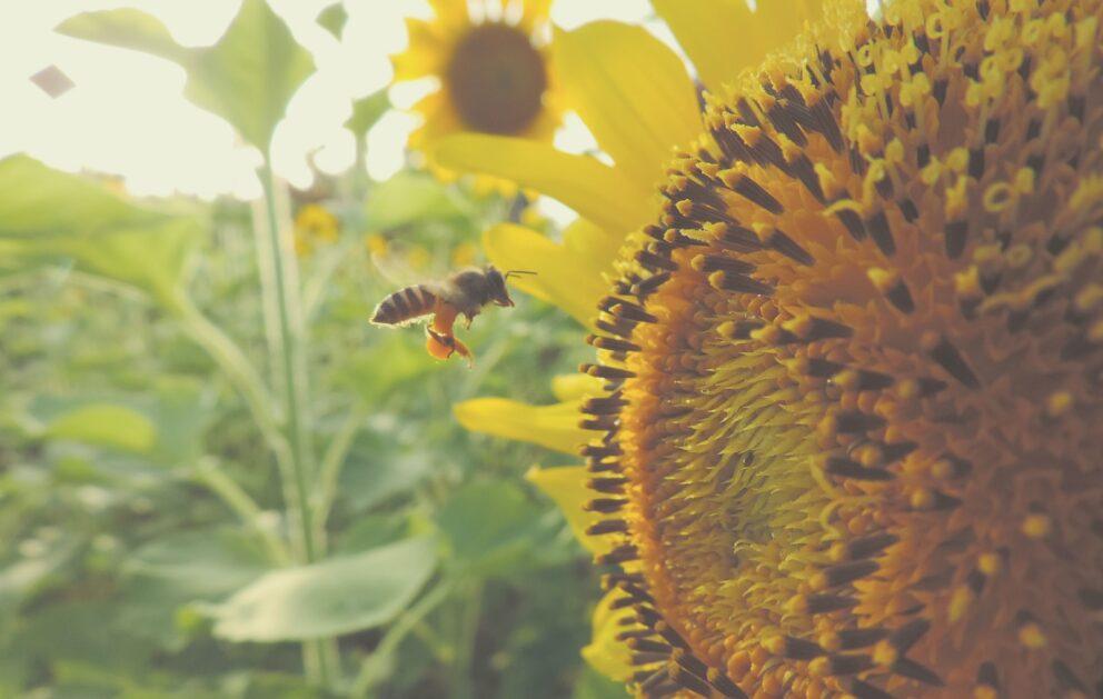 Sluneční záření pro květiny