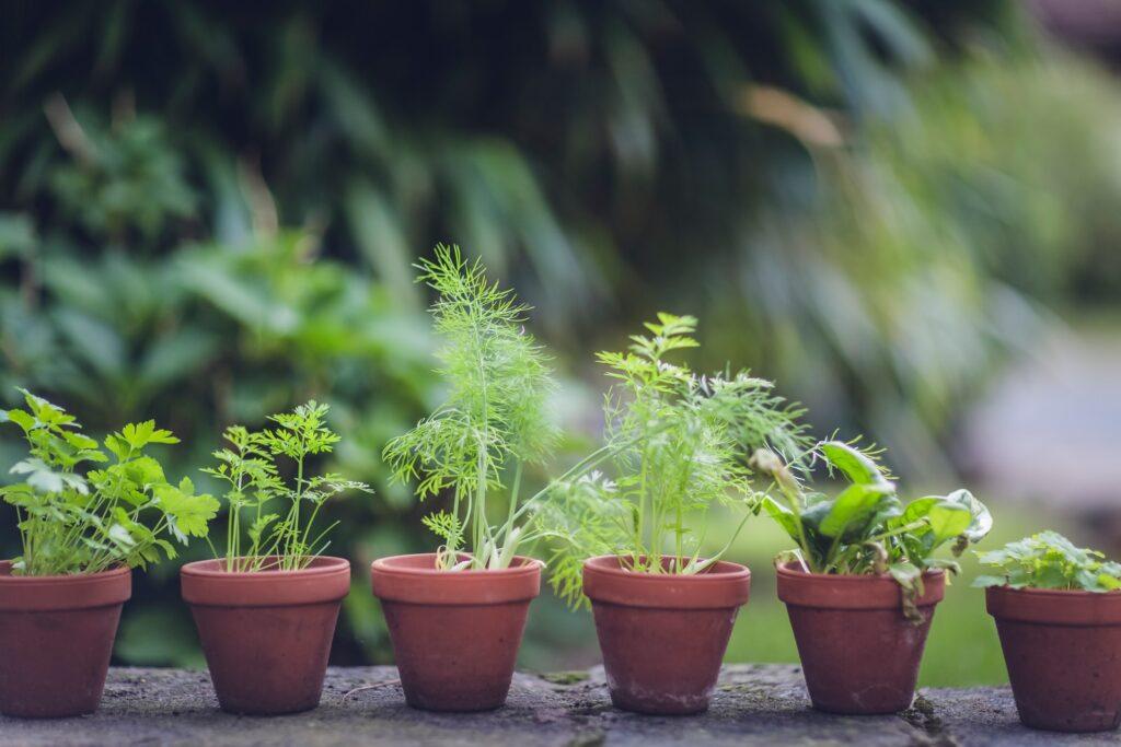 Zelené bylinky
