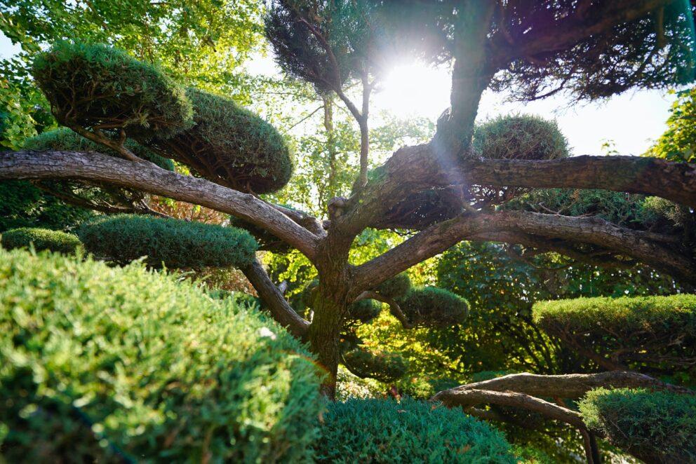 Rostliny na slunci